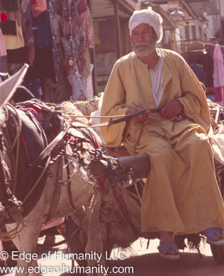 Man and his horse cart - Egypt.