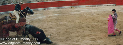 Bullfighting - Acapulco, Mexico