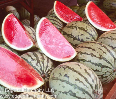 Watermelon - Ecuador.