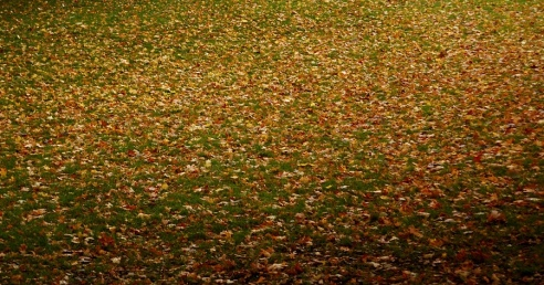 Natural Patterns - Ground cover by leaves