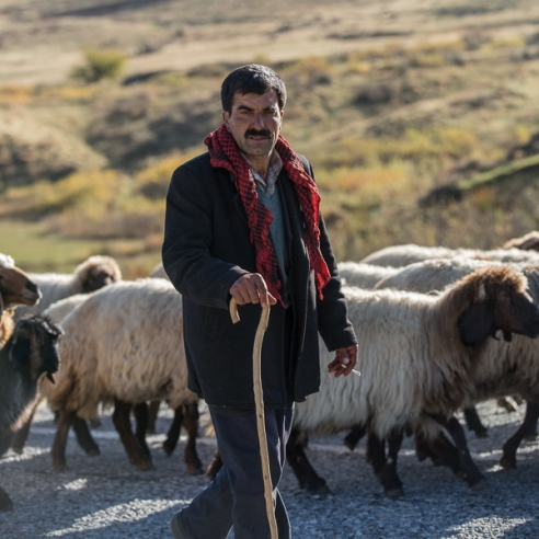 Shepherd - Turkey