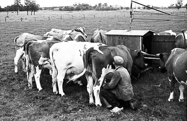 Lalanne farmer photo essay