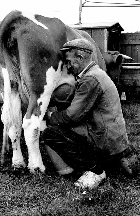 Farm in Holland 1960's
