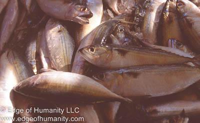 Fresh fish - Thailand.