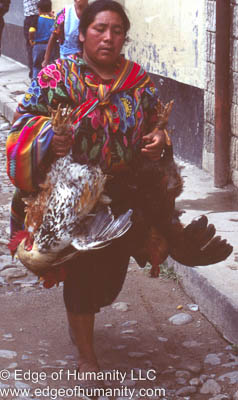 Woman taking home live chickens - Guatemala.