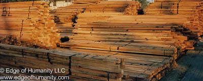 Lumber Yard, Indonesia.