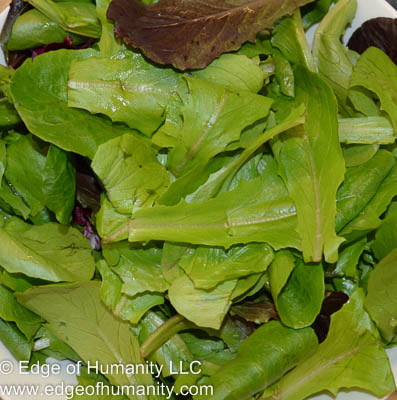 Italian blend of greens: Baby green romaine, baby red romaine, baby green-leaf lettuce, radicchio, frisee and endive.