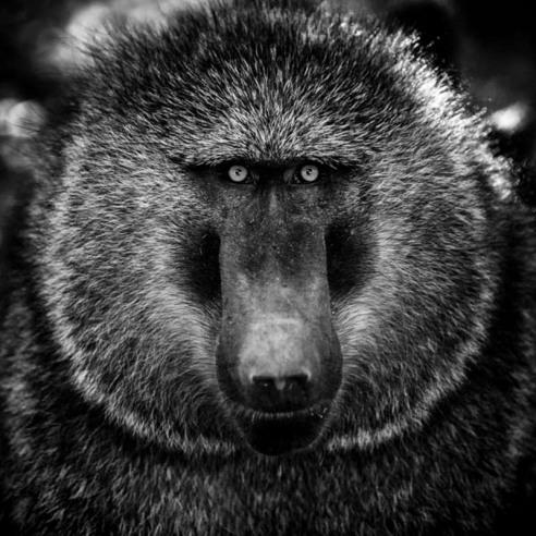 Preservation of wildlife essay