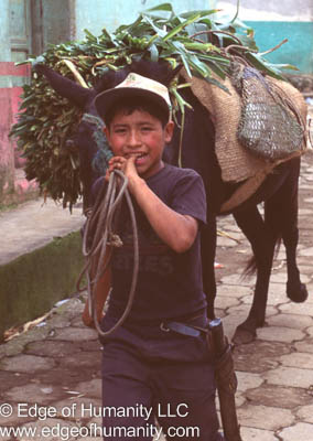 Boy leading a horse transporting goods in Guatemala.