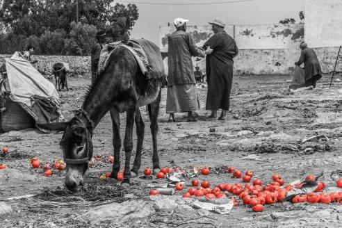 Local market outside of Essaouira, Morocco.