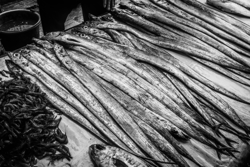 Fish from the local market - Essaouira, Morocco.