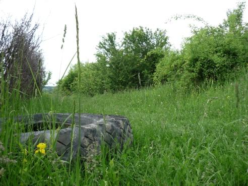 Tire in the grass Dambovita, Romania