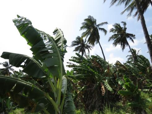 Indigenous farms behind the south coast of Kenya