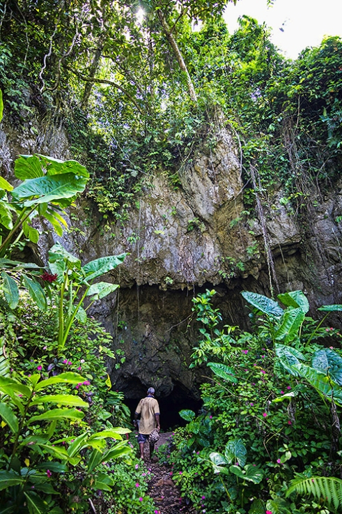 Wailotua Cave Entrance: 200km away on the Island Of Viti Levu, the Turaga Ni Koro passes the blossom of jewel-toned flowers into the gusts of chilled air exhaled from the mouth of the esoteric Wailotua Caves. The cave is well known for its mass of Fiji Blossom Bats... and myths. Local legend tells of Ono, the six headed serpent who has domain over these caves. The Turaga Ni Koro says Ono's faces can be seen within the karst structures that play with light (and the mind), embellishing the walls and ceilings of each cavern. These natural caves in Wailotua Village are home to the world's majority of Fiji Blossom Bats.