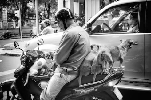 Five dogs on a scooter Ho Chi Min City, Vietnam
