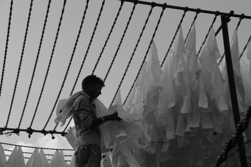 A washer man arranges a large volume of white shirts in washline.In Dhobi Ghat each or a group of washer men have their own expertise, seen here is a young worker who only handles white shirts