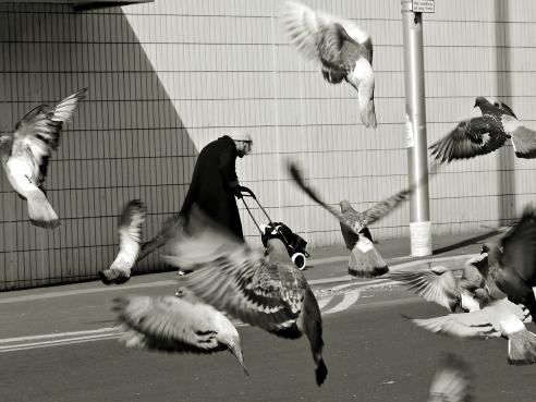 Old Birds Blackpool UK