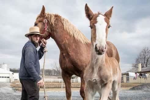 Amish Horsemaster