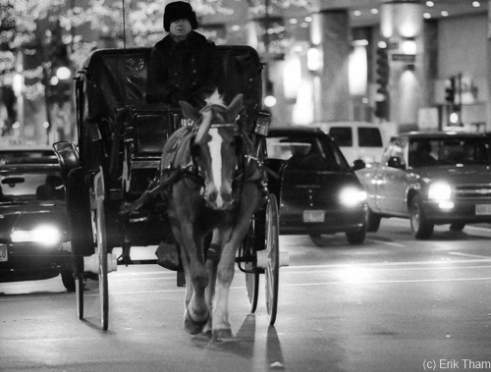 Chicago, IL: A horse carriage in dense traffic during the evening rush hour on Michigan Ave.