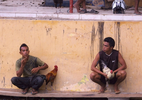 Timor Leste: Chook fighting is the national sport of Timor Leste. As questionable as the 'sport' is it religiously takes place around 5pm every day in every town of the tiny nation.