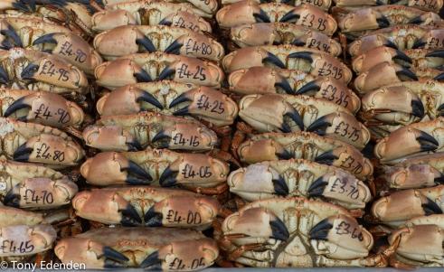 Crabs for sale Bridlington, East Yorkshire, England