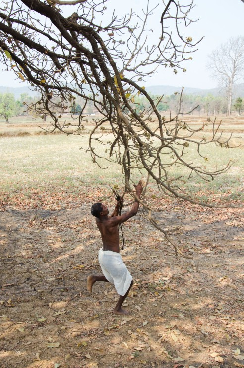 The Baiga tribe lives in union with Mother Nature and considers it their duty to protect her from destruction. Baiga Tribe Village outside Kanha National Forest in Madhya Pradesh, India.