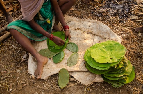 Tendu leaves are stitched together and used as plates for occasions such as weddings. This environmentally conscious alternative has now also become a meagre source of income for the womenfolk. Baiga Tribe Village outside Kanha National Forest in Madhya Pradesh, India.