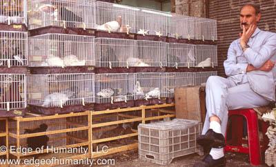Pigeon shop Syria(before civil war)