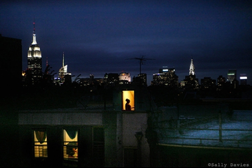 Out my window. East Village looking forth to Midtown. NYC