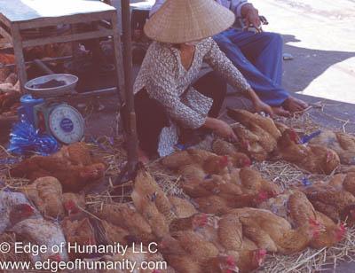 Chicken seller Vietnam