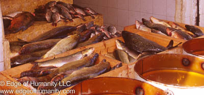 Fish on trays Syria(before civil war)