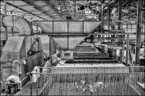 Latex washing process<br/> Chup Rubber Factory, Kompong Cham Province, Cambodia
