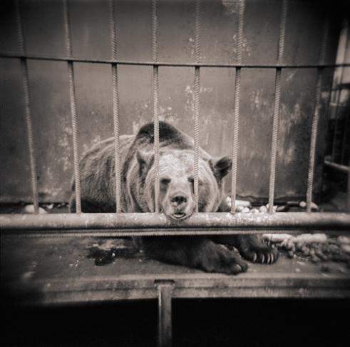 Sadness, Yaroslavl, Russia