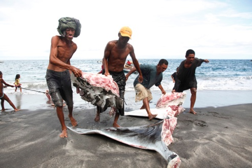 Men carry parts of a large manta ray to the beach after harpooning it.