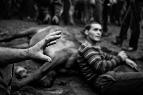 The fighters are confronted with horses, as equals, without ropes or poles, to immobilize them and cut their manes. Amil-Moranã in Galicia, Spain.
