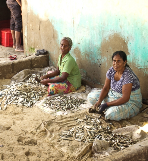 Two women descale the catch of the day. Sri Lankan society has staggering gender inequality; the women in fishing communities are tasked with the most menial and simple jobs Mannar Pier, Sri Lanka, 2015