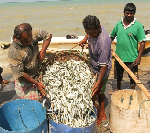 There are major problems facing Tamil fishermen in the near future. The government's actions are accompanied by environmental concerns caused by the destruction of coral by fishing trawlers and the dumping of nuclear waste is obliterating the Indian Ocean Mannar Pier, Sri Lanka, 2015