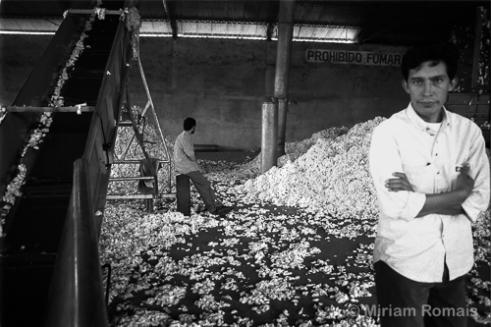 Ortiz Waiting for Repairs, Téxtil Toro Branco, 1998