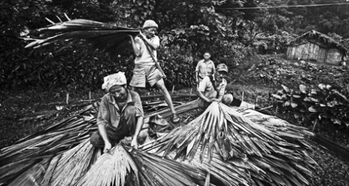 People belonging to the Nocte tribe making the roof of a house using Toco leaves in Khonsa village, Tirap district. The house making of the chieftain of a village involves people from all the household. It's a 3 day long affair with feasts that includes roasted pork and kham (rice beer).