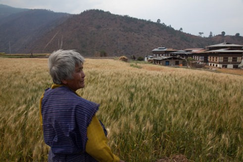 A Bhutanese lady in traditional dress stands in front of the fields that she has been harvesting by hand.