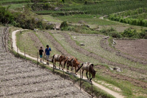 Horses are sued for transport purposes and farming activities. This is on the path to the monastery outside Uma Pharo
