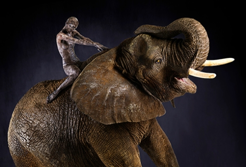 African elephant with female human rider painted with the elephants coloration.
