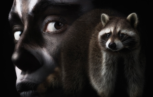Raccoon composited with woman face painted to match.
