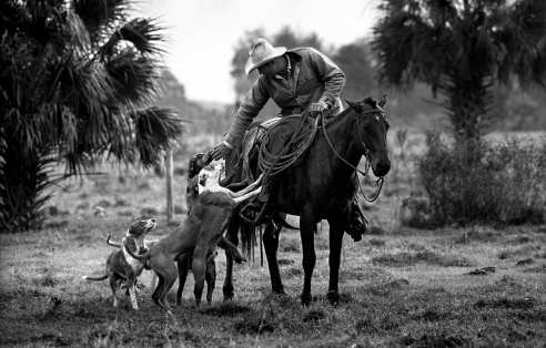 John and His Dogs-------Cur dogs are a useful tool for Florida Cowhunters. The dogs flush the cows out of the palmetto scrubs where it is difficult for humans and horses to go. The cur dog also will round up a runaway cow or calf from the herd.