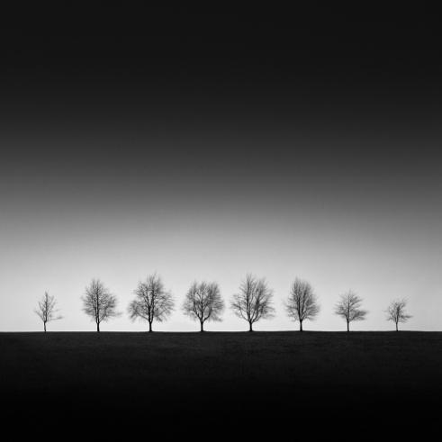 Linearity Black Forrest, Germany