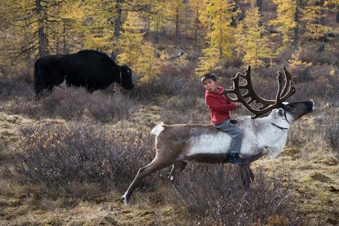 Reindeer Race Bayandalai Ganbat (11) rides his father's reindeer.