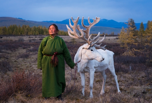"""TSAATAN WOMAN WITH REINDEER """"My life is like ortz. I move a lot every year."""" Saintsetseg Jambaldorj (49), a member of the Tsaatan ethnic minority, describes her life. Ortz are the teepee-like tents which Tsaatan people use as homes. Made from wooden staves and canvas, they can be easily packed up and carried to new locations. The Tsaatan people are one of the last remaining groups of nomadic reindeer herders in Mongolia. They seasonally migrate within the forests of the Taiga according to weather and food conditions for their majestic animals."""