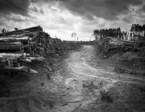 Log piles Block 0582 Ghost Valley July 2015