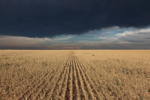 Drought damaged wheat with storm clouds, just east of Elkhart - July 2011