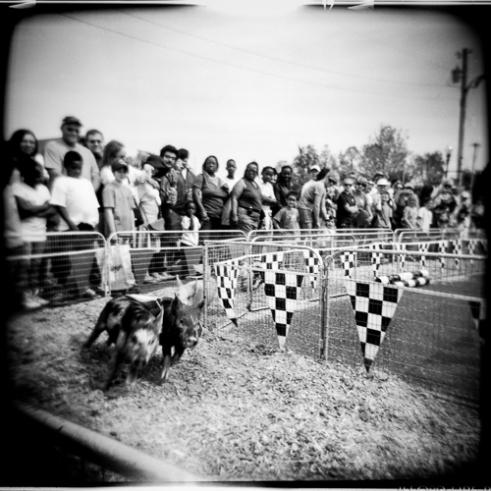 Pig Races Juke Joint Festival, Clarksdale